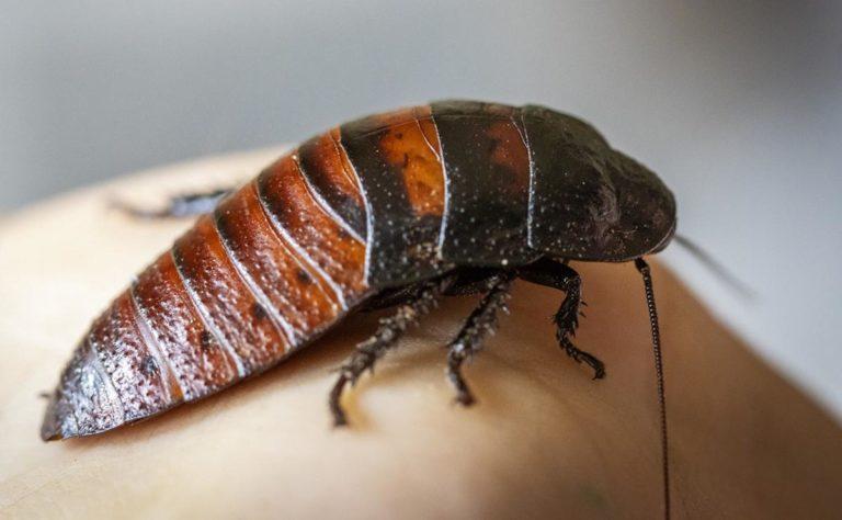 Szkodniki i owady są czymś, co chcesz zwalczyć?