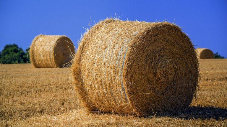 Rolnictwo nadal jest popularne